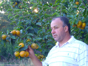 Solomos and Nashi Fruit Trees